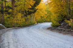 Fall Aspen Road Stock Photography