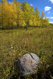 Fall Aspens Stock Image