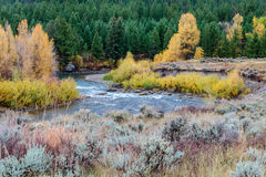 Fall Aspens Along a Wyoming River Stock Photos