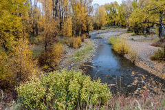 Fall Aspens Along a Wyoming River Stock Photography