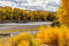 Fall Aspens Along a Wyoming River Stock Photo