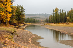 Fall Aspens on the River Banks Royalty Free Stock Images