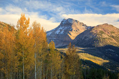 Fall aspens in the Uinta Mountains. Stock Photos