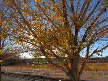 Fall-Atmosphäre Stockfotografie
