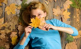 Fall atmosphere attributes. Woman pretty lady enjoy cozy season hold autumn dry leaves. Girl blonde lay on wooden. Background with orange leaves top view. Fall stock photography
