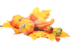 Fall, Autumn Arrangement Stock Images