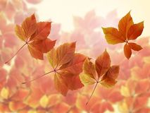 Fall autumn background. Colorful red and orange autumn leaves with sun rays stock image