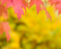 Fall autumn background Royalty Free Stock Photos