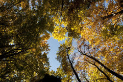 Fall autumn colored forest foliage Royalty Free Stock Photos