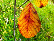 Fall. Into Autumn colors of the leaves stock photography