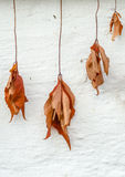 Fall Or Autumn Dead Leaves Stock Image