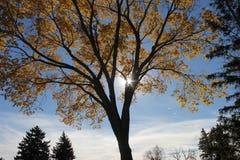 Fall/autumn-Farben von Bäumen Stockbilder