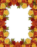 Fall Autumn flowers border. Image and illustration composition for Thanksgiving, Fall, Autumn  Leaves, page border, background or template with colorful mums Royalty Free Stock Photos