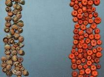 Fall autumn frame, pumpkins, acorn. Closeup still life, heap of tiny red and orange pumpkin pods and acorns. Autumn, Fall, Halloween concept. Grungy frame Royalty Free Stock Image