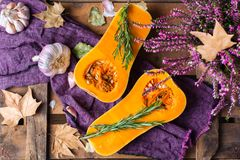 Fall autumn harvest background with butternut squash pumpkin and rosemary. Fall autumn harvest thanksgiving concept. Organic fresh ripe butternut squash pumpkin Royalty Free Stock Photo