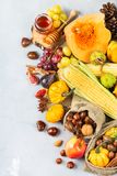 Fall autumn harvest background with pumpkin apple chestnut corn Royalty Free Stock Photo