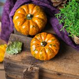 Fall autumn harvest background with thanksgiving decorative festive pumpkin Royalty Free Stock Images