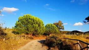 Fall autumn landscape with yellow field and blue sky. Stock Photos