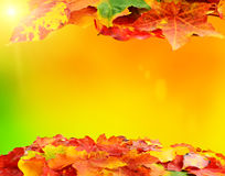 Fall autumn leaf background. Decoration with copyspace for your text Royalty Free Stock Images