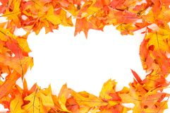 Fall - Autumn leaf border royalty free stock photography
