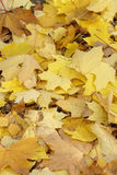 Fall autumn leaves Royalty Free Stock Photos