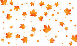 Fall autumn leaves background. Flying maple leaves . Vector autumn background Royalty Free Stock Image