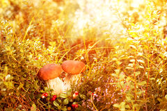 Fall, autumn, leaves background. Mushrooms and berries in the fo Stock Photo