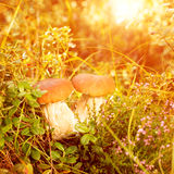 Fall, autumn, leaves background. Mushrooms and berries in the fo Royalty Free Stock Image