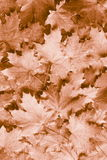 Fall / Autumn leaves background - Stock Photos Royalty Free Stock Image