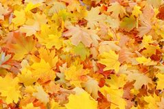 Fall / Autumn leaves background - Stock Photos Royalty Free Stock Photo