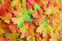 Fall / Autumn leaves background - Stock Photos Royalty Free Stock Photography