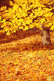 Fall, autumn, leaves background. A tree branch with autumn leave Stock Image