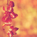 Fall, autumn, leaves background. A tree branch with autumn leave Stock Photo