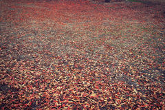 Fall autumn leaves with different colors fallen to the ground in a forest Royalty Free Stock Photos