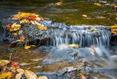 Fall, autumn leaves fall into mountain brook. Royalty Free Stock Photos
