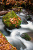Fall Autumn Leaves Forest Stream Bubbling Brook Mossy River Royalty Free Stock Photos