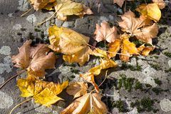 Fall autumn leaves on the ground,. Copy space Royalty Free Stock Photos