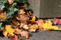 Fall autumn leaves on the ground,. Copy space Stock Photo