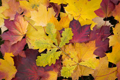 Fall autumn leaves Stock Photo