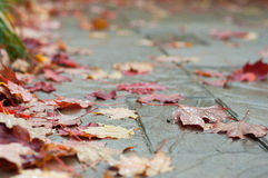 Fall autumn leaves on patio stone Royalty Free Stock Photo