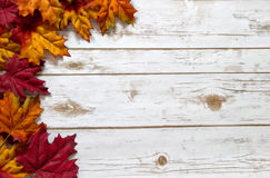 Fall and Autumn leaves on a whitewashed wood plank board. Colorful autumn leaves in red, orange, and yellow border a whitewashed wood plank board with room for Royalty Free Stock Images