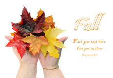 Fall autumn leaves in women hands Stock Photos