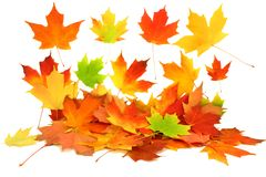 Fall autumn maple leaves Stock Photos