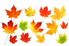 Fall autumn maple leaves Royalty Free Stock Photography
