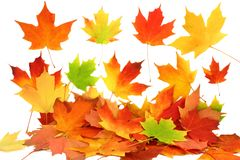 Fall autumn maple leaves Stock Images