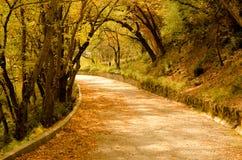 Fall autumn park. Royalty Free Stock Image