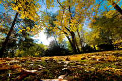 Fall autumn park. Falling leaves Royalty Free Stock Photography