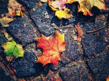Fall of autumn royalty free stock photo