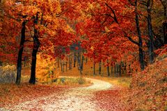 Fall, Autumn, Red, Season, Woods Royalty Free Stock Photography