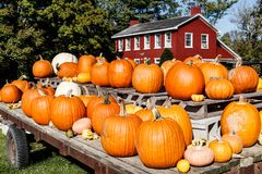 Fall and Autumn Halloween scene with pumpkins and gourds for sale and a barn colored house I stock photos